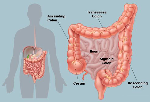 articles-colon-health