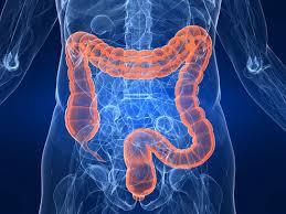 intestinal-seepage